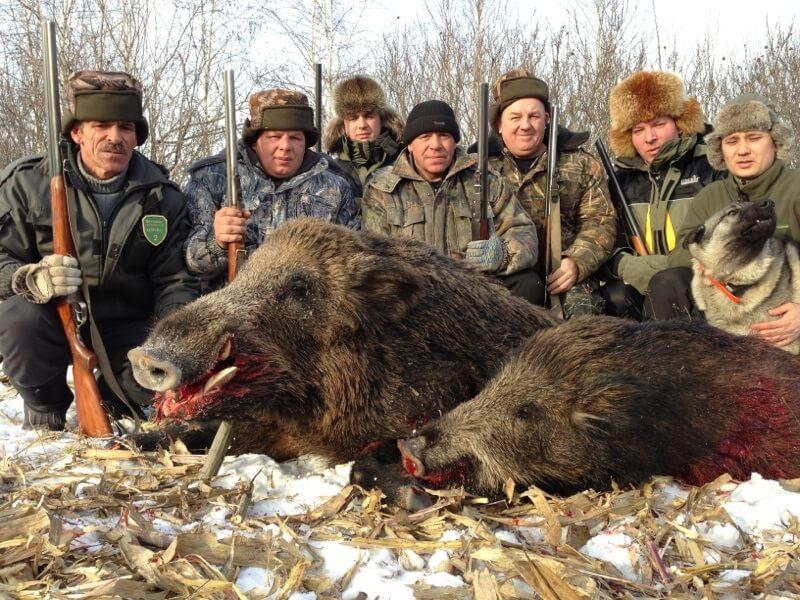 """Результат пошуку зображень за запитом """"зимове полювання на оленя"""""""